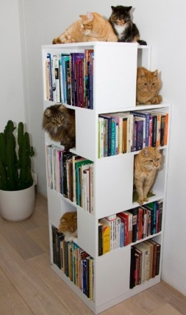 Books and kitties. Two of my favorite things. (Real books, because this lady will NEVER own a damn eReader.)