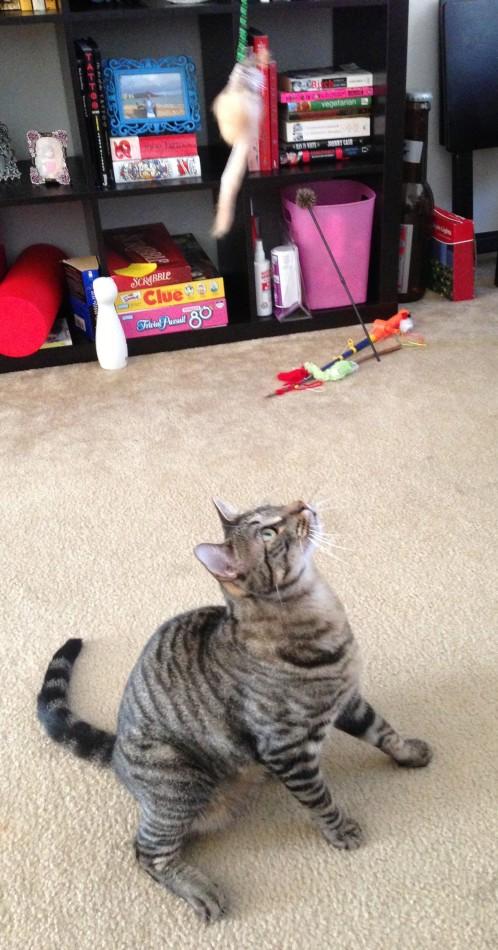 Taco loves his Neko toy.