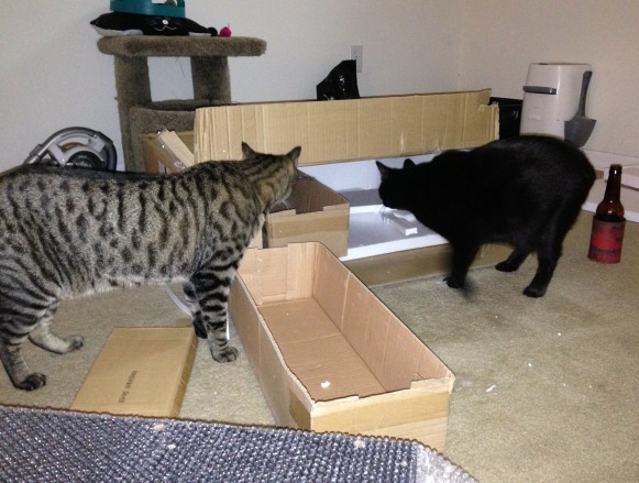 OMG MOMMY GOT US A BOX! It was funny when Moosh got inside and I banged on the top of the box. I'm an a-hole. Instant karma, though. I knocked over my beer in the process.
