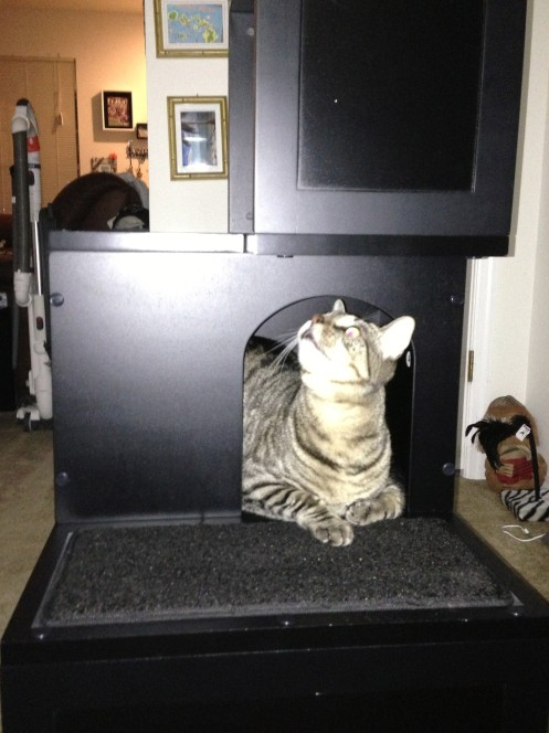 Taco's chillin' in his kitty cubby hole!