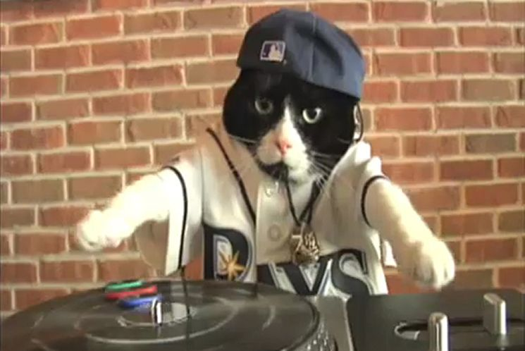 The REAL LIFE DJ Kitty.