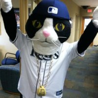 What does baseball have to do with cats?