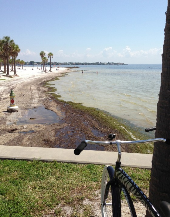 This is a lovely beach. But you don't wanna swim in it. This is Tampa Bay water. Not as, um, clean. You wanna go to the gulf side. But it's still pretty!